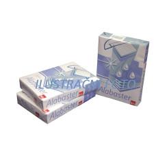 ALABASTER - copy paper A4 70 g/qm